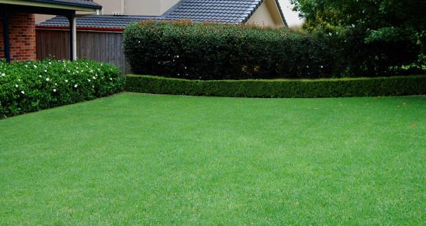 Зеленый ковер перед домом
